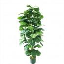 Feigenbaum ingemaakt 150cm hoogte, groen